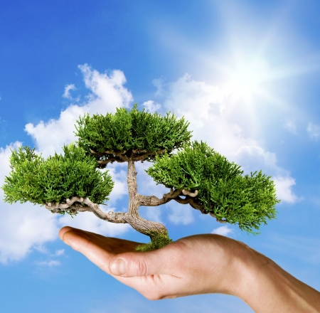 Hand holding tree against blue sky Stock Photo - 4757519