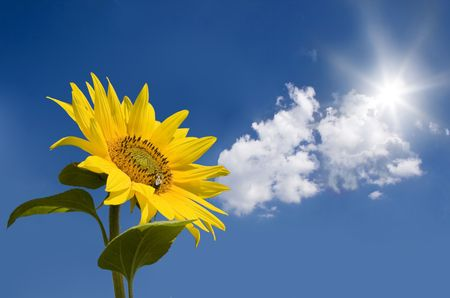 Sunflower against blue sunny sky Stock Photo - 5278038