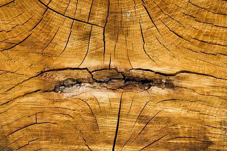 Close up on tree stump photo