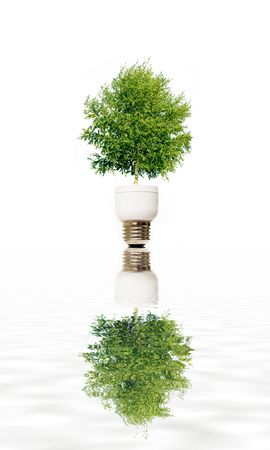 Tree in eco light bulb symbolizing green energy Stock Photo - 5501164