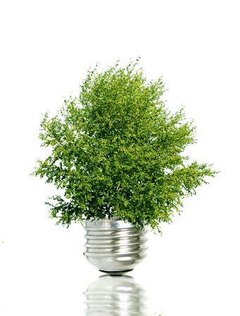 Tree in light bulb symbolizing green energy photo