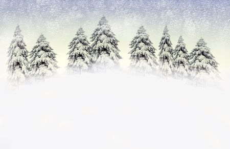 Pine trees and snow falling photo