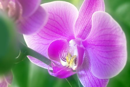 purple orchid: Close up on orchid