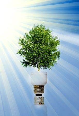 Tree in light bulb symbolizing green energy Stock Photo - 6515658
