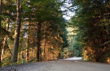 evergreen forest: Sunset in evergreen forest  Stock Photo