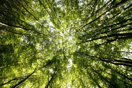 Tree canopy Stock Photo - 7802920