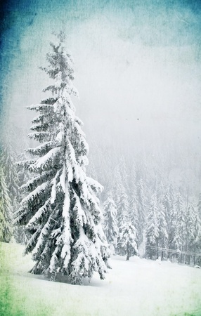 Grunge christmas background with snowy firs photo