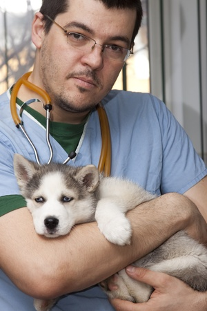 Husky puppy at vet  photo