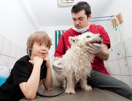 Little boy at vet listening to his dogs heartbeats in stethoscope  photo