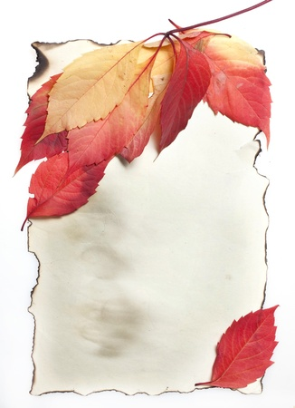 Autumn Leaves on Old burnt Paper  photo