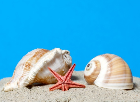 Seashell and starfish on blue background  photo