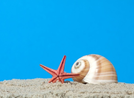 Seashell and starfish on blue background  photo