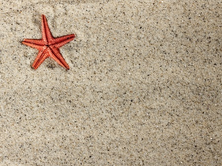 Starfish in sand photo