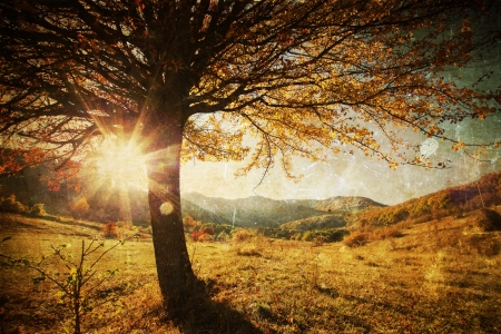 panorama view: Lonely beautiful autumn tree - vintage photo