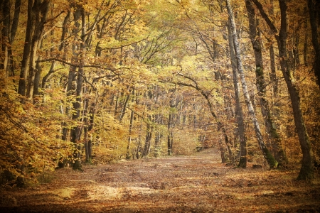Vintage photo of autumn forest  Stock Photo