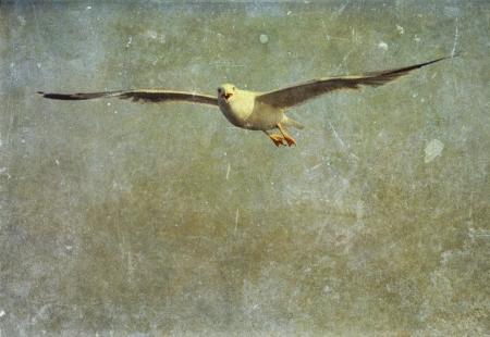 Vintage photo of flying seagull photo