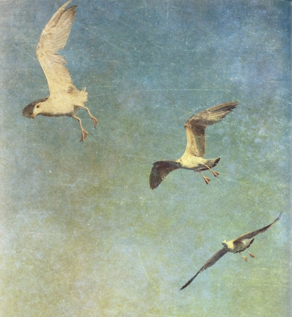 Vintage photo of flying seagulls photo