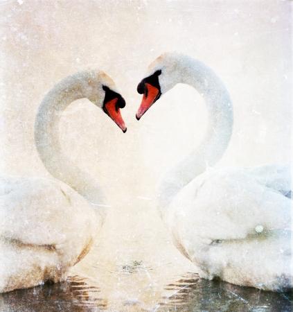 Swans Herz Standard-Bild - 22237343
