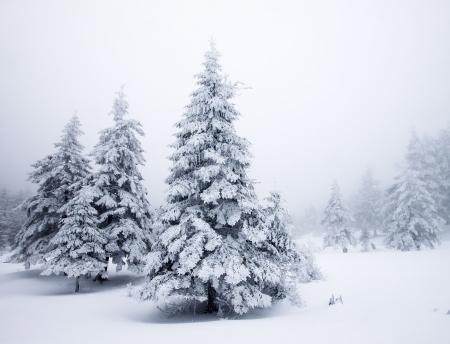 눈 덮인 전나무와 크리스마스 배경