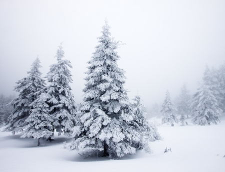 happy holidays: Kerst achtergrond met besneeuwde dennenbomen