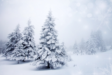 december: Christmas background with snowy fir trees