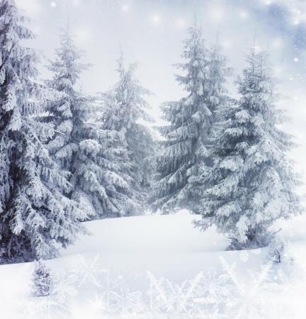 눈 덮인 전나무 나무와 크리스마스 배경