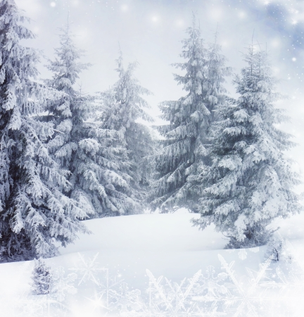 winter window: Christmas background with snowy fir trees