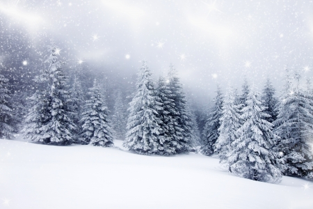 Christmas background with snowy fir trees photo