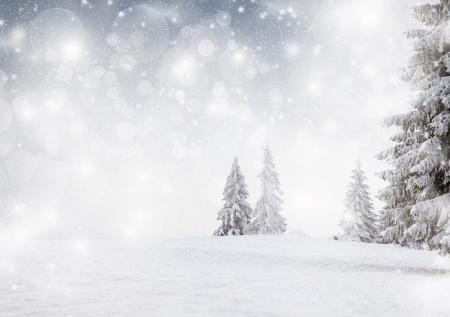 눈 덮인 전나무와 겨울 풍경