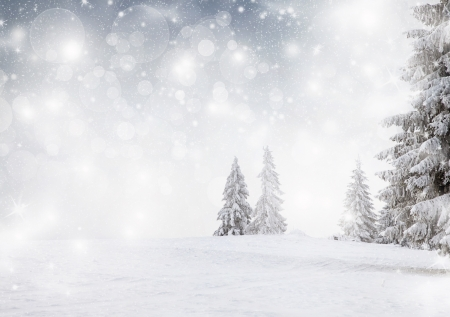 Winter landscape with snowy fir trees Stock Photo - 24588658