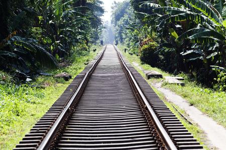 railway tracks: Railway tracks in jungle Stock Photo
