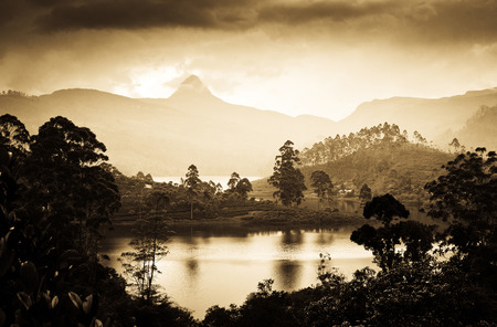pada: Panorama of the tea plantations at sunset - Sri Pada peak in the background
