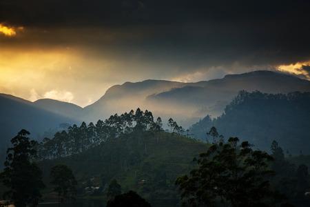 pada: Panorama of the tea plantations at sunset - Sri Pada peak in the background