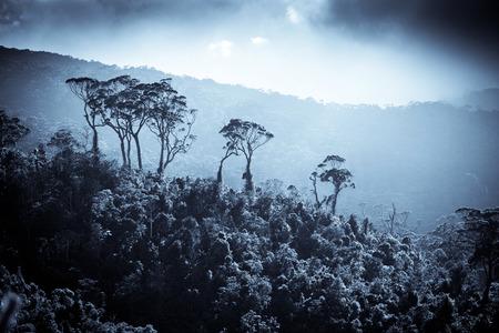 Tea plantation landscape in Sri Lanka photo