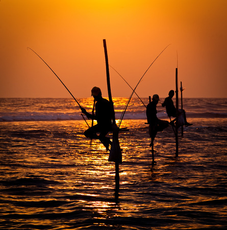 fishman: Silhouettes of the traditional stilt fishermen at the sunset near Galle in Sri Lanka
