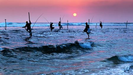 un p�cheur: Silhouettes de p�cheurs sur pilotis au coucher du soleil pr�s de Galle au Sri Lanka