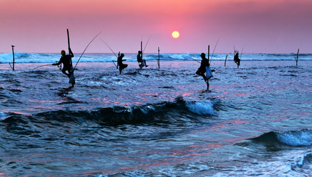 Silhouettes of the traditional stilt fishermen at the sunset near Galle in Sri Lanka photo