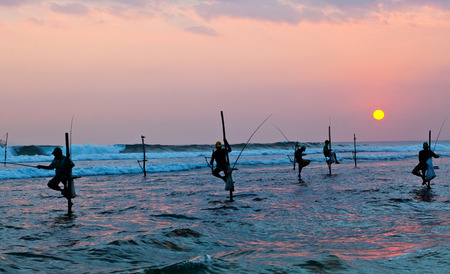 galle: Silhouettes of the traditional stilt fishermen at the sunset near Galle in Sri Lanka