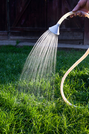 irrigating: Watering the grass