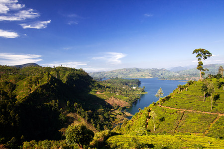 lanka: Tea plantation landscape in Sri Lanka