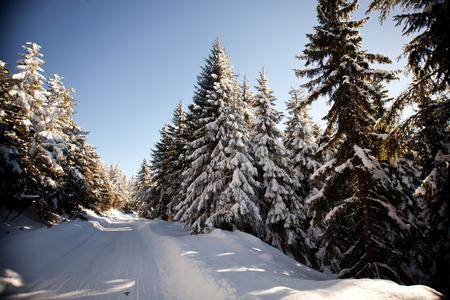 abeto: Winter landscape with snowy fir trees Foto de archivo