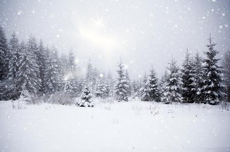 abetos: Paisaje de invierno con abetos nevadas