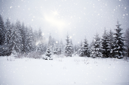 firs: Winter landscape with snowy fir trees Stock Photo