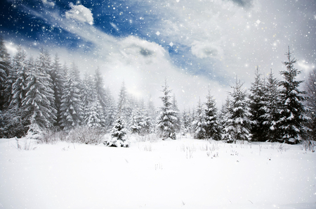 christmas scene: Winter landscape with snowy fir trees Stock Photo