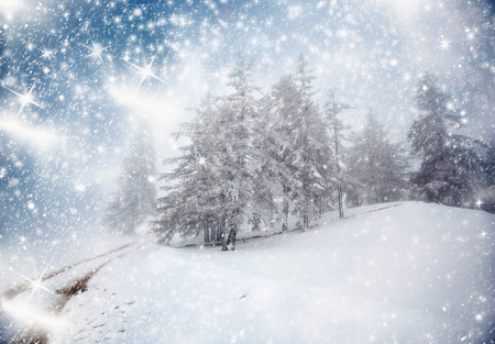 christmas winter: Winter landscape with snowy fir trees Stock Photo