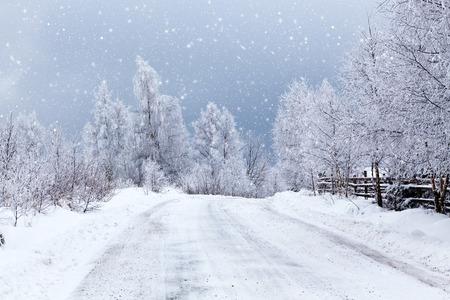 abetos: Winter landscape with snowy fir trees Foto de archivo