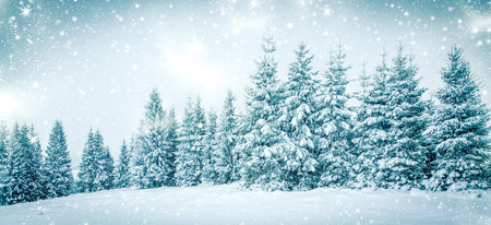 winter trees: christmas background of snowy winter landscape with snow or hoarfrost covered fir trees and copy space - winter magic holiday Stock Photo