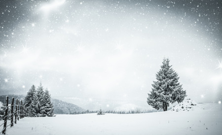 snow  snowy: christmas background of snowy winter landscape with snow or hoarfrost covered fir trees and copy space - winter magic holiday Stock Photo