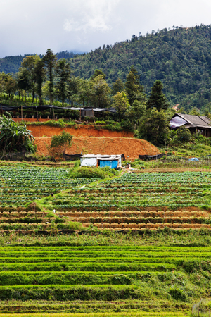 green paddy fields around Ma Tra village in the summer, Sa Pa, Vietnam Imagens