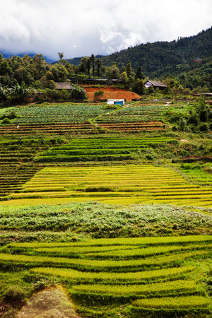 green paddy fields around Ma Tra village in the summer, Sa Pa, Vietnam Stock Photo
